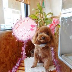 1月クッキー君3歳