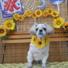 モコちゃん14歳